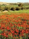 Весной на Кипре