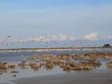 Соленое озеро, Перволье